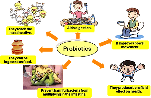 probiotic dairy products benefits and advantages